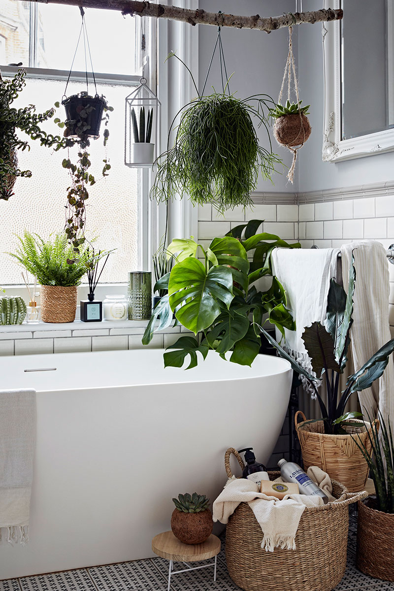 Houseplants in bathroom
