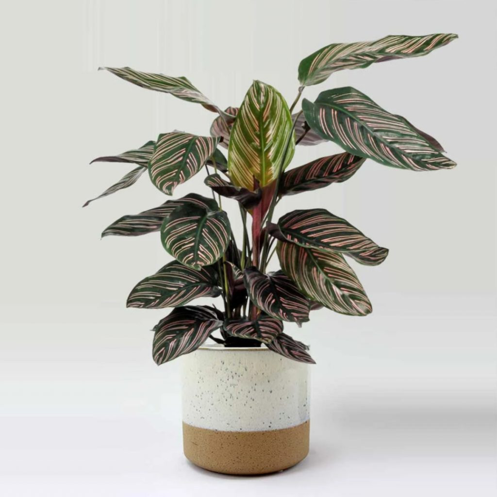 Best house plants for kitchen