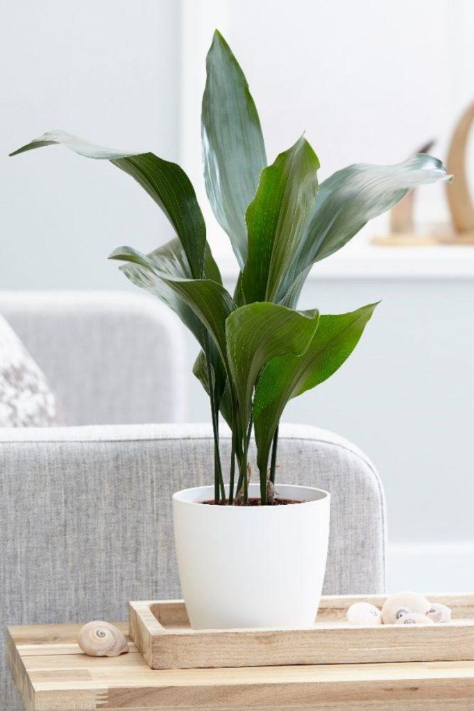 Best houseplants for bathroom