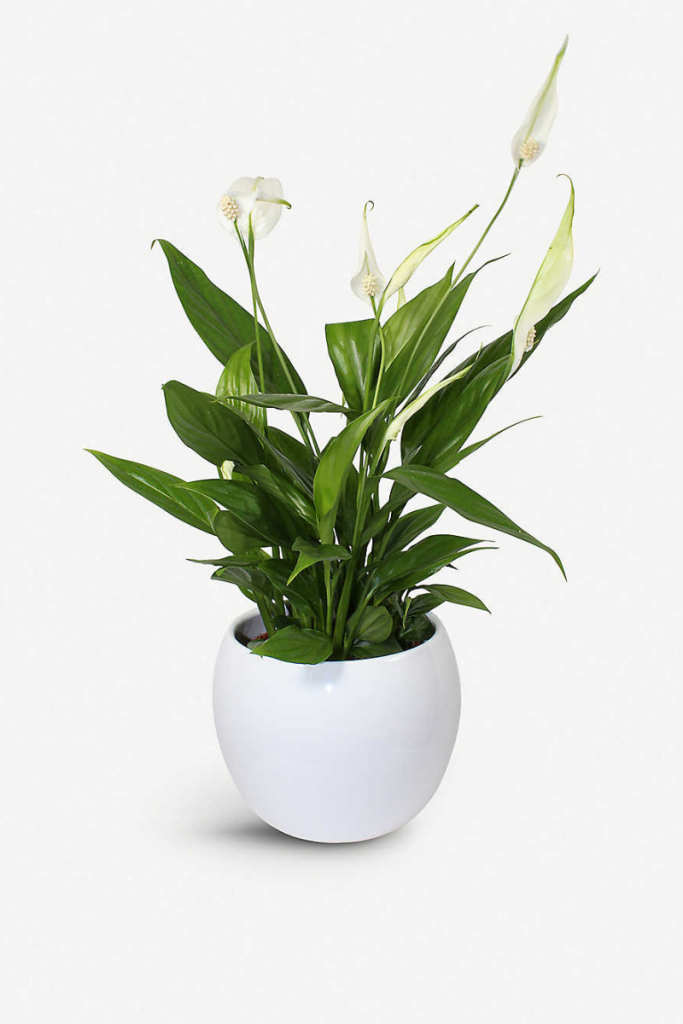 House plants for bathroom